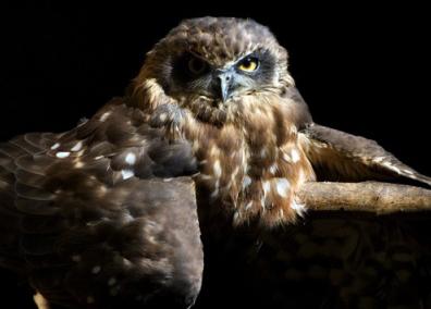 owl_centre
